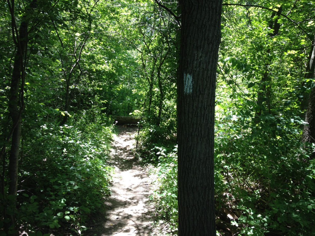 White Trail