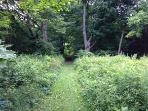 Chesney Trail Start