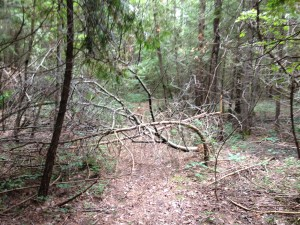 Chesney Trail obstacle