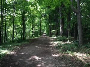 bechtel park trail