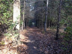 fanshawe trail