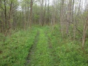 LCH Grass Trail