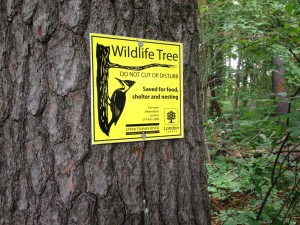 Kains Woods Wildlife Sign