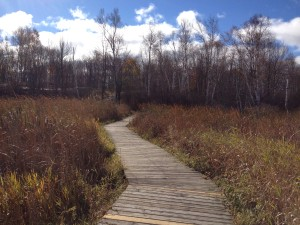 Laurier Woods Boardwalk