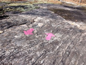 Laurier Woods Rock Markers
