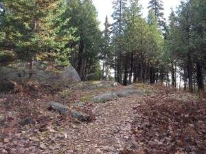 Laurier Woods Trail