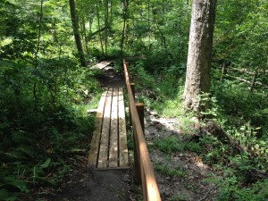 Medway Forest Boardwalk