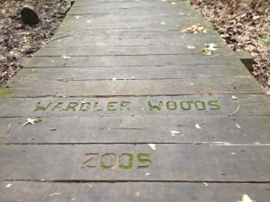 Warbler Woods