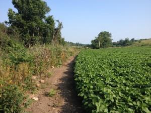 farmer field section