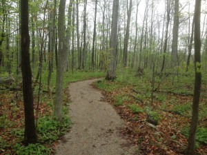 LCH woods