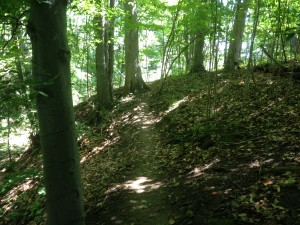 Kains Woods Trail