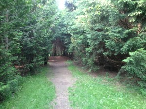 Lioins Lake Wooded Trail