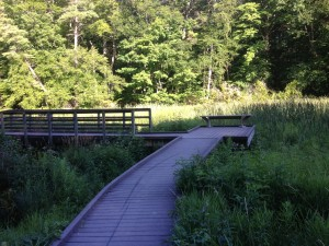 Springwater Boardwalk