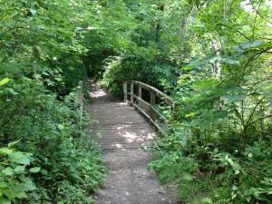Mewday Forest Footbridge