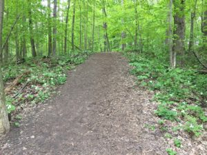 Warbler Woods Trilliums